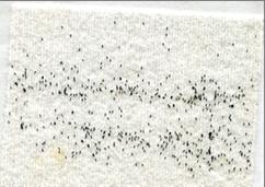 Mosquito eggs