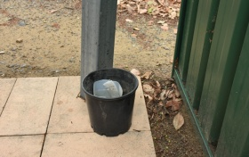 Backyard mozzie trap