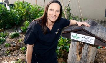 Renae McBrien native bee hive PAH